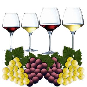 les foires aux vins dans les supermarchés et magasins spécialisés